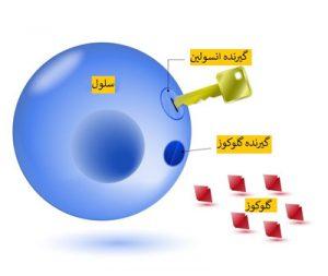انسولین - قند خون